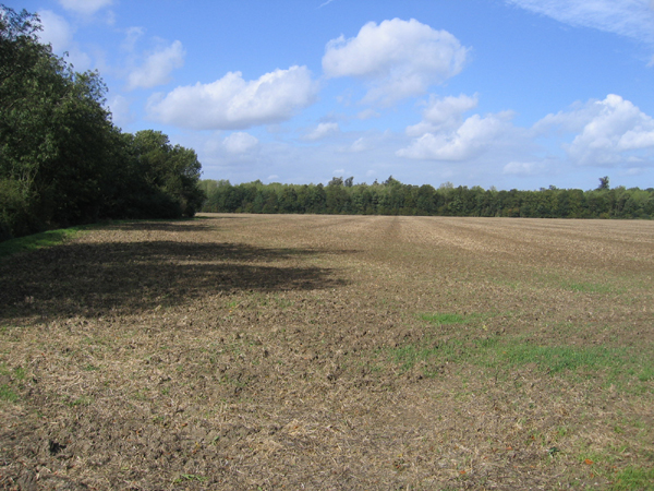 Farmland view, Gravenhurst, Beds