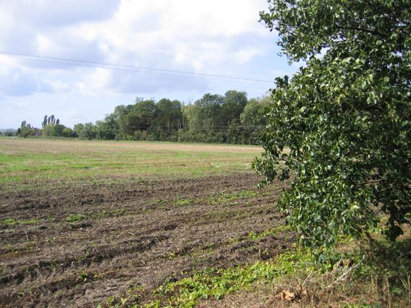 Farmland SE of Lower Gravenhurst, Beds