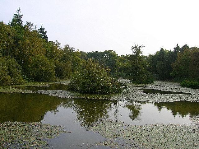 Lake, Abbots Wood