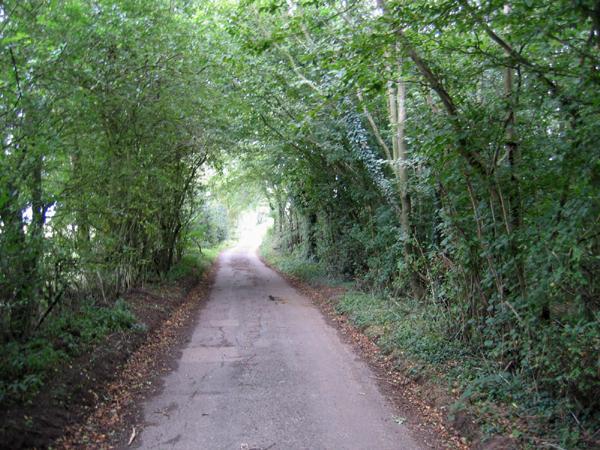 Leafy lane, Lenham, Kent