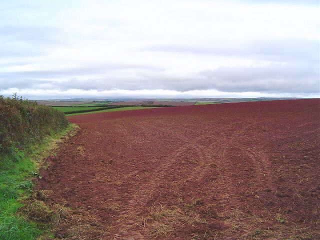 Devon red field