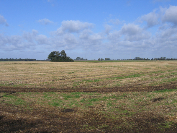 Little Tower's Fen, Thorney Cambs