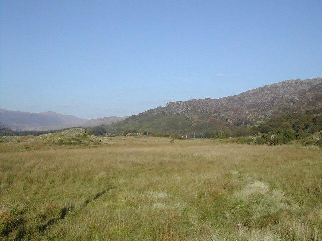 Bog 500 feet up near Coed Llewellyn