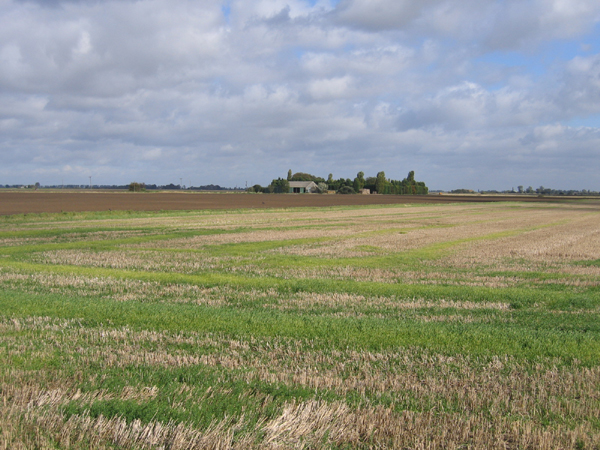 Farmland from Fall's Drove, Crowland, Lincs