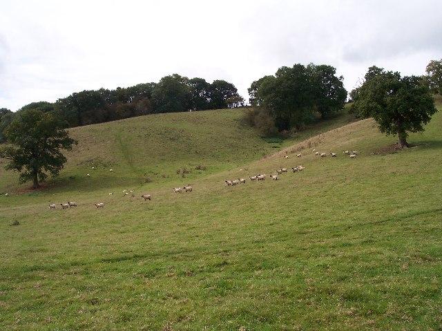 Sheep Grazing near Ham Farm