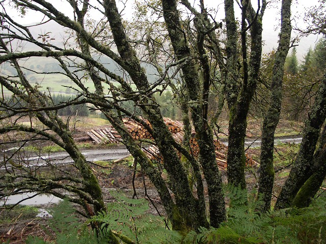 View through lichen-covered tree