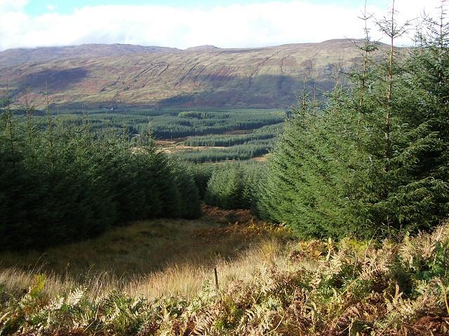 Forestry above Glen Dochart