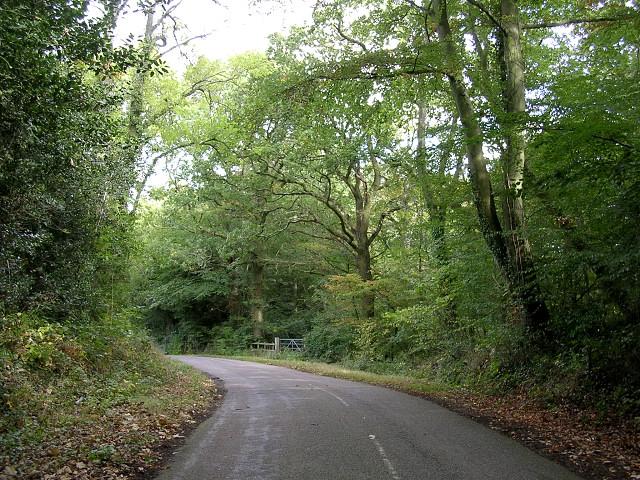 Staplewood Lane through Staplewood Copse