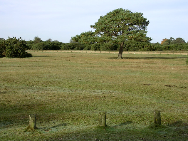 Lawn at Janesmoor Pond car park, New Forest
