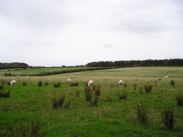 Cutteith Wood