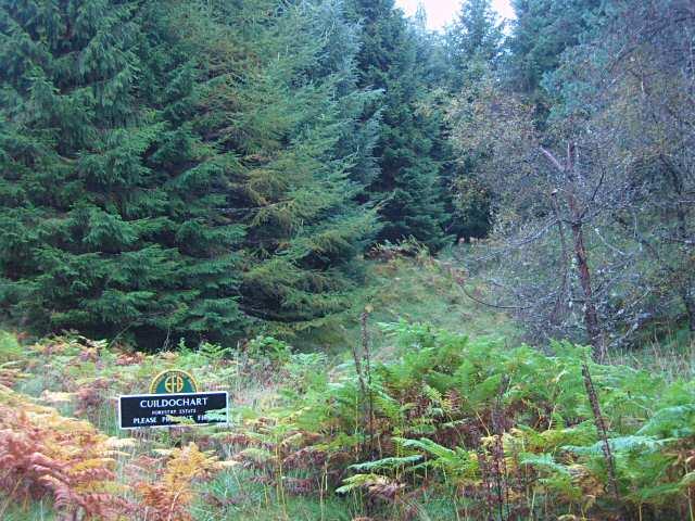 Cuildochart Forestry Estate