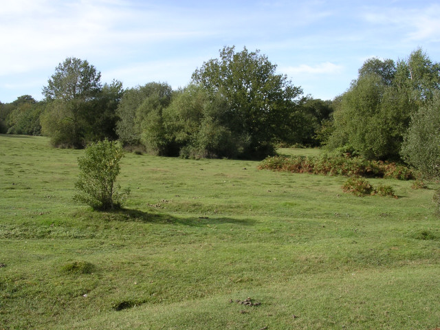 Lawn and open woodland, Castle Malwood Walk, New Forest