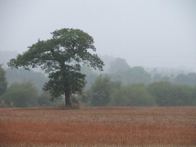 Farmland near Haw Park Wood