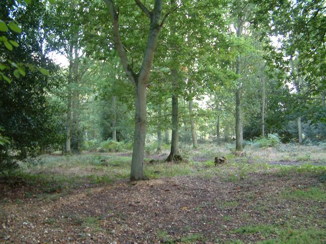 Pamber Forest. - on the way to Gravelpit Copse