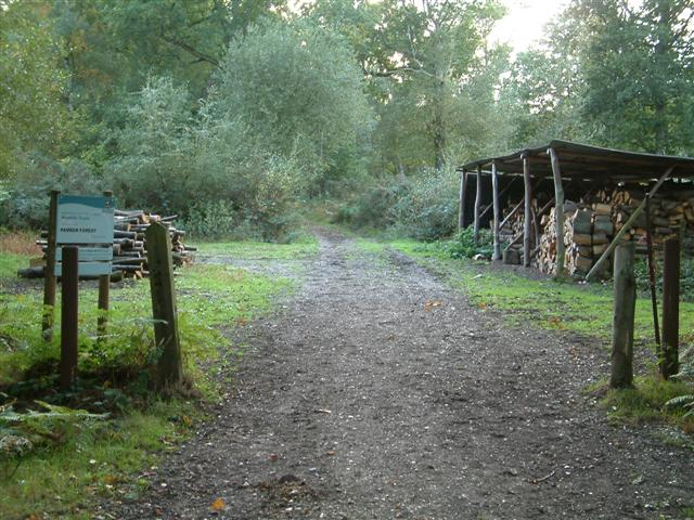 Pamber Forest  Woodyard