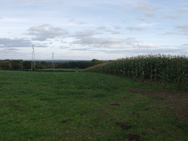 Maize ready to harvest at Coedleoedd