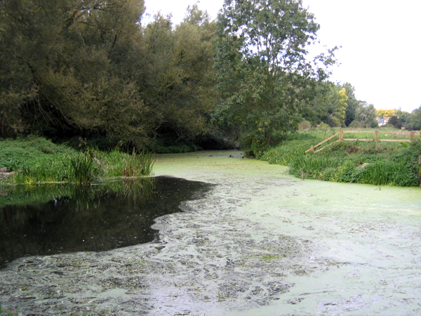 Byron's Pool, Grantchester, Cambs