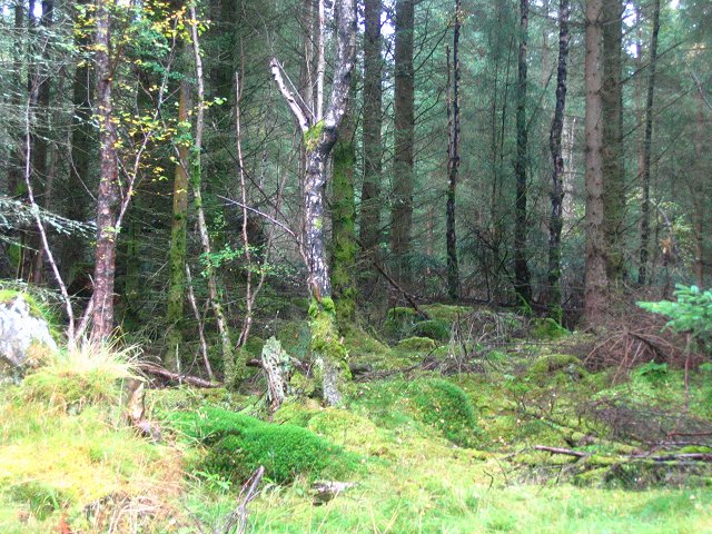 Drummond Hill Forest