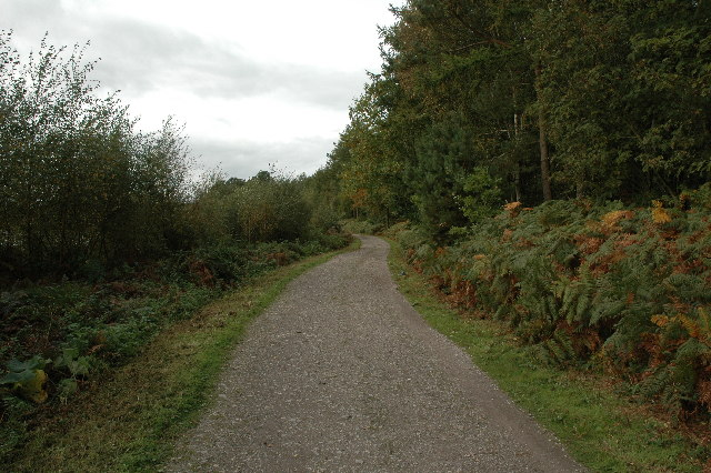 Footpath through Delamere Forest