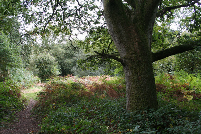 Langford Budville: Langford Heathfield Nature Reserve