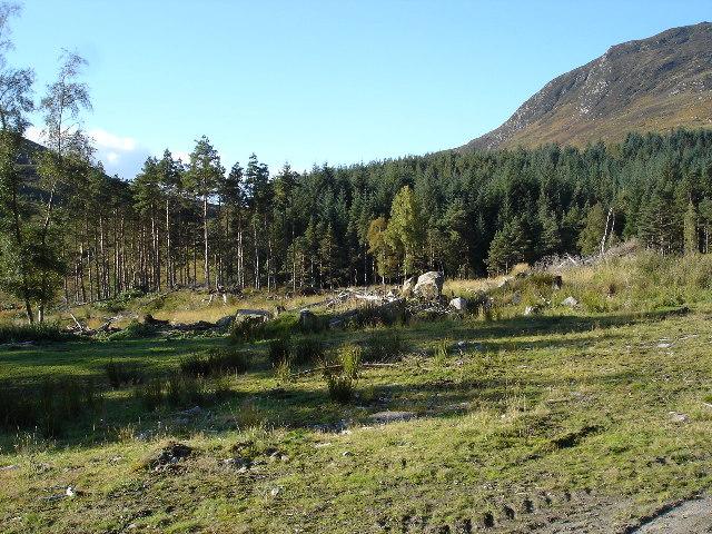 Forestry in Gleann Meinich