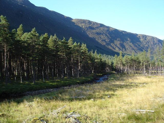 Gleann Mèinich Forestry