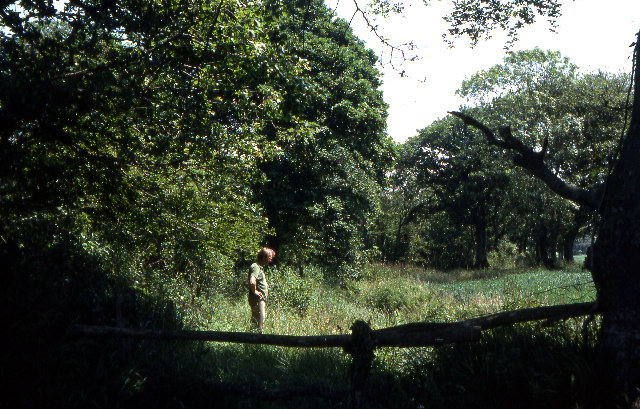 Bed of former Bude Canal, Cann Orchard, 1976