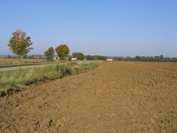 Farmland S of Wrestlingworth, Beds