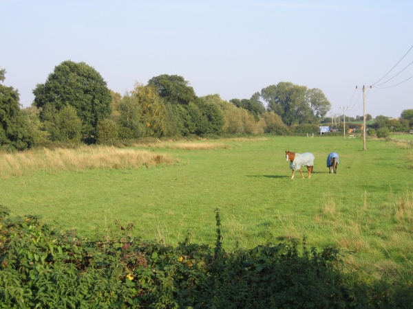 River Flit meadows, Flitton, Beds