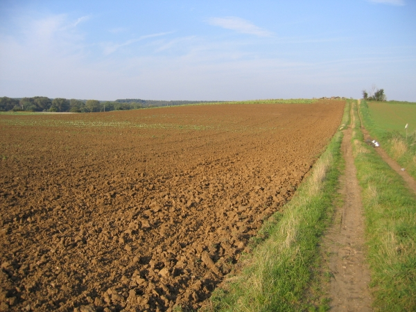 Farmland NW of Silsoe, Beds