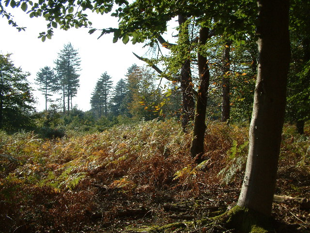 Roe Enclosure, New Forest