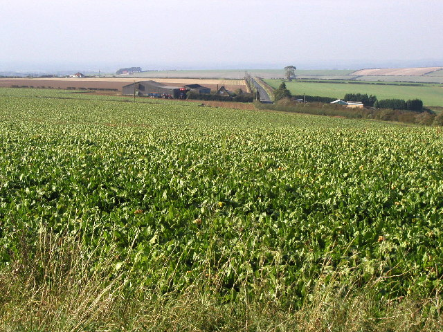 Farmland View