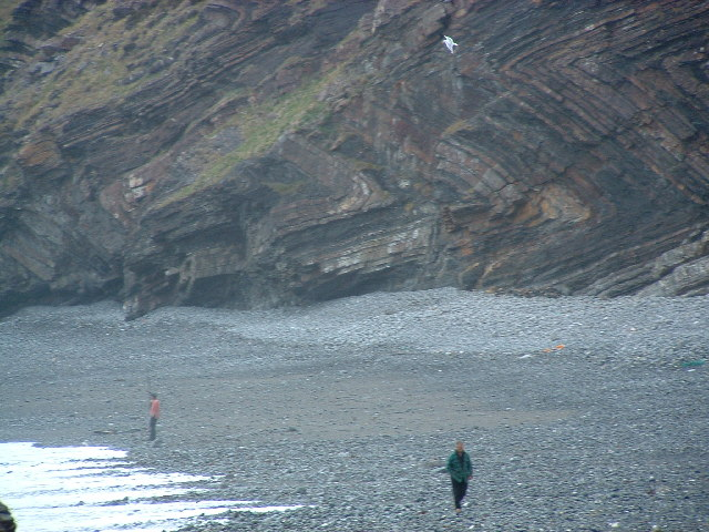 Cliff on NE side of Millook Haven