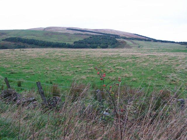 Field near Drum.