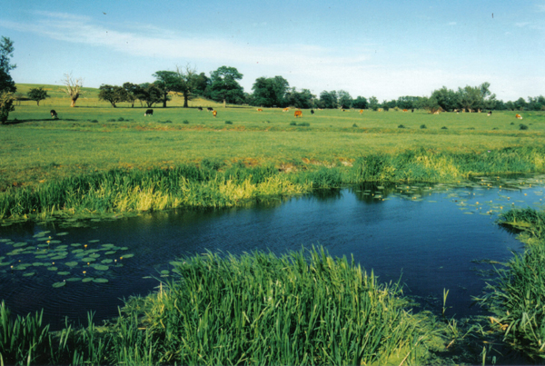 River Waveney and meadows between Brome and Scole