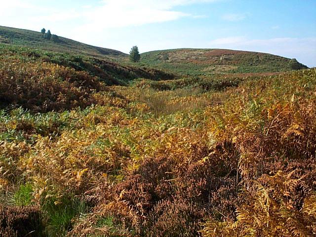 Spa Hill Clough