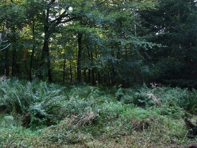 Managed woodland in Barkestone Wood