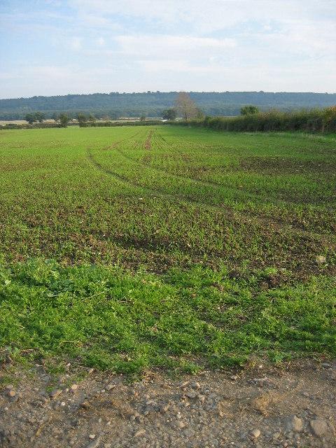 Farmland near Stathern