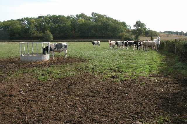 Livestock in a field near Tibberton
