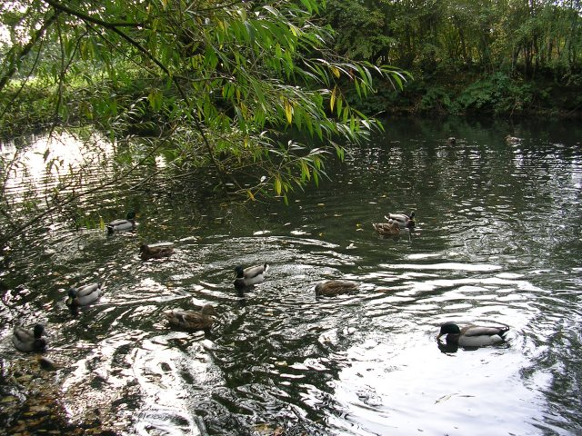Pond at Pewterspear