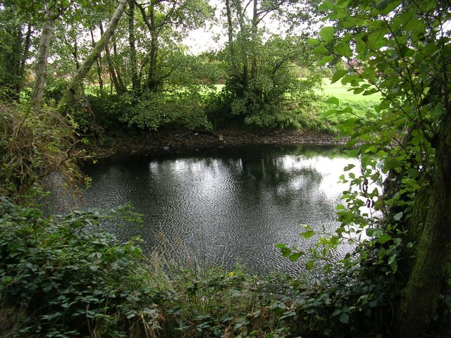 Pond at the Edge of the Wood