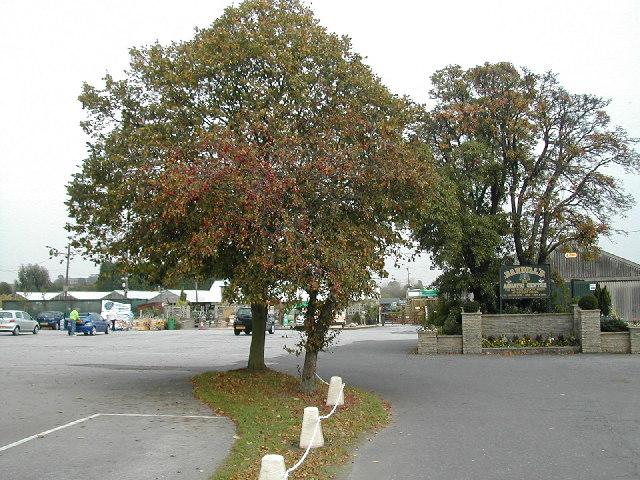Bardills Garden Centre Toton