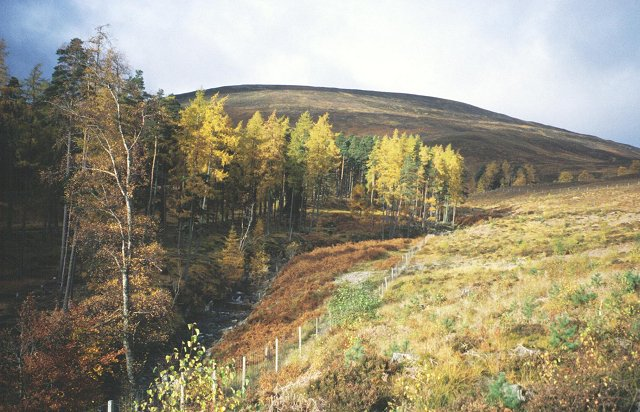 Woods below Meall a'Mhuic.