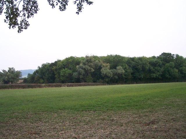 Copse near Bozard's Farm