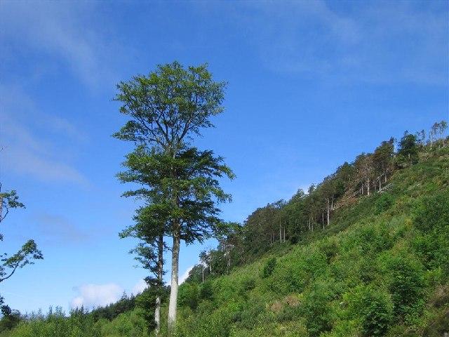 Forestry Plantation, Flowerdale Estate
