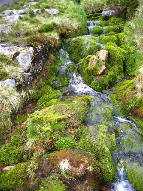 Mossy stream on descent from Beinn Alligin