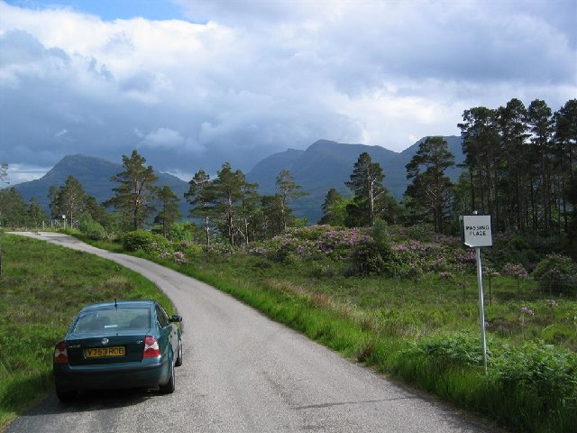 Scots Pines and Rhododendrons