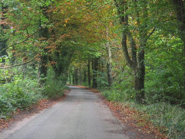 A leafy Surrey Lane