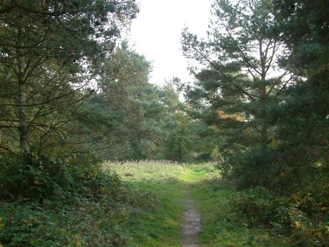 A footpath through the trees