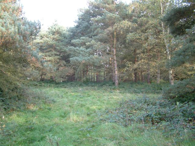 A  clearing in the Woodland
